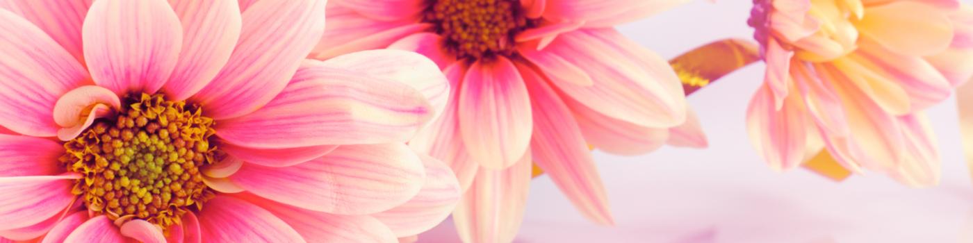 CAScents_professional-slider-Blooms